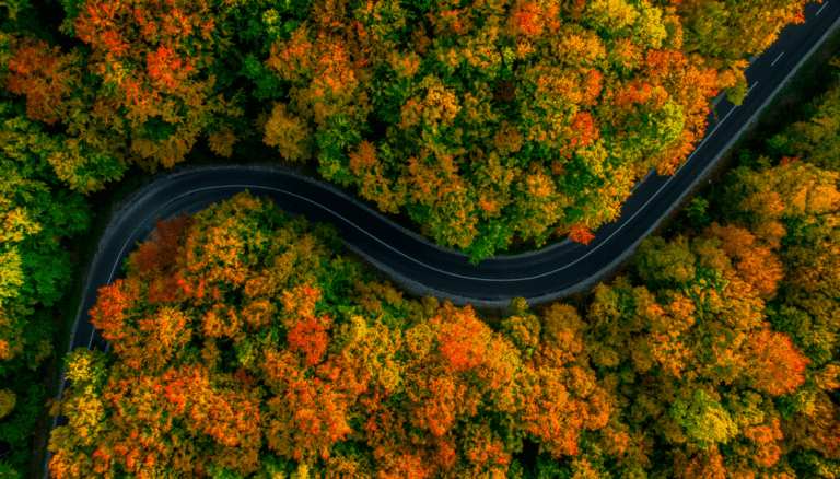 drone shot of highway cutting through trees in autumn